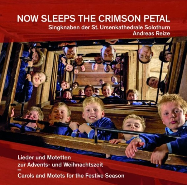 Now Sleeps the Crimson Petal: Carols and Motets for the Festive Season | Rondeau ROP6134